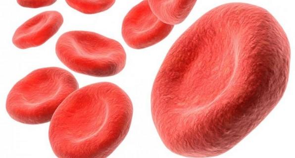 гемоглобин у человека