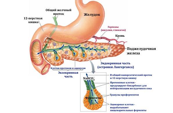 реактивные изменения в поджелудочной железе