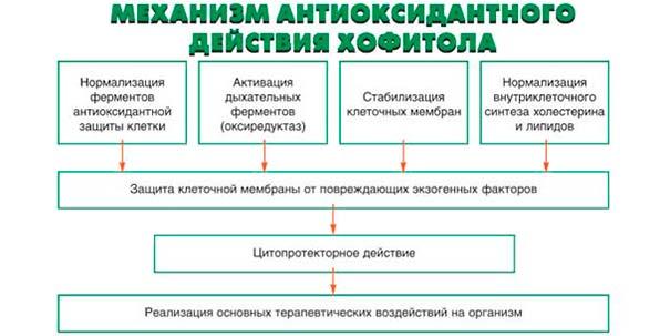 антиоксидантное действие хофитола