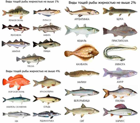 не жирные сорта рыб