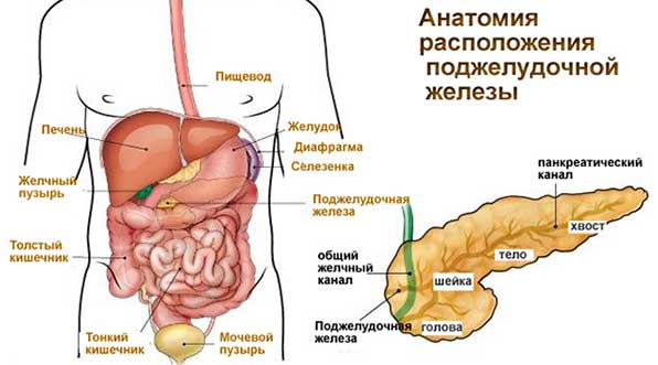 Болезненные точки при поражении поджелудочной железы