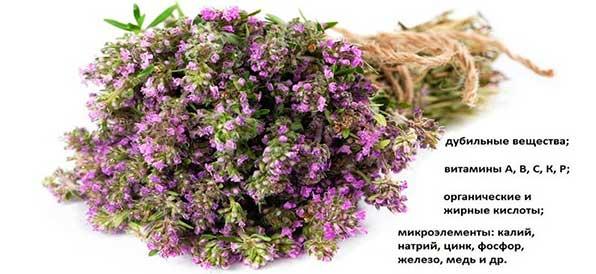 состав травы чабрец