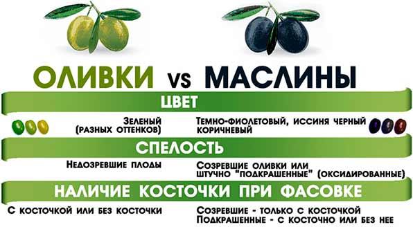 разница оливок и маслин