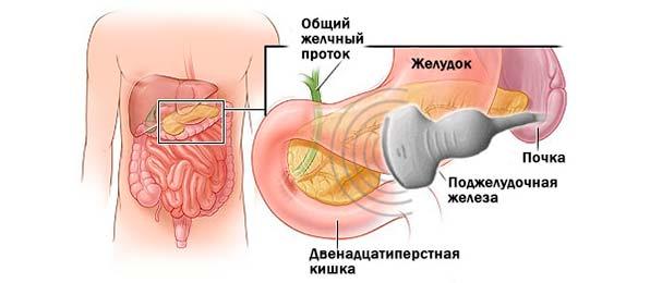 Эластографическое исследование поджелудочной железы
