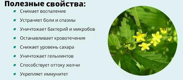 Польза травы и корней репешка