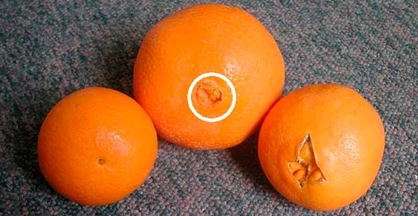 Апельсины с ямкой