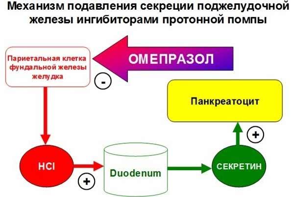 Ингибиторы протонной помпы